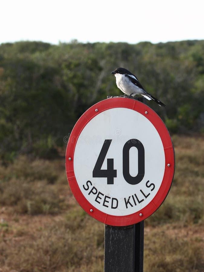 Vogel auf einem Zeichen. lizenzfreie stockfotos