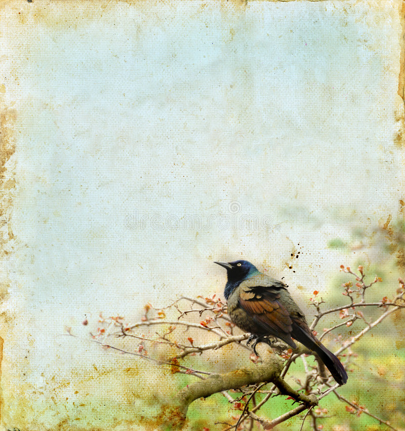 Vogel auf einem Zweig mit einem grunge Hintergrund lizenzfreies stockfoto