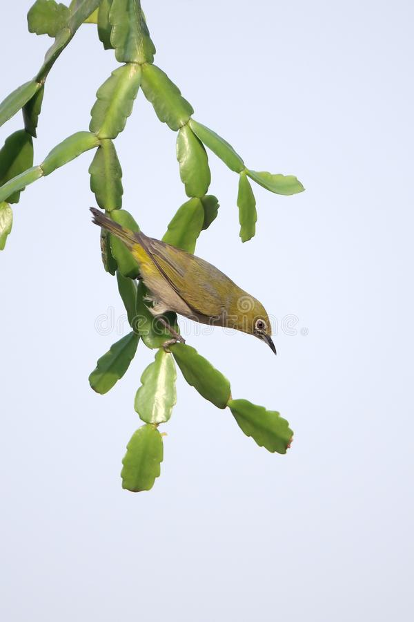 Vogel auf Grünpflanze lizenzfreies stockbild