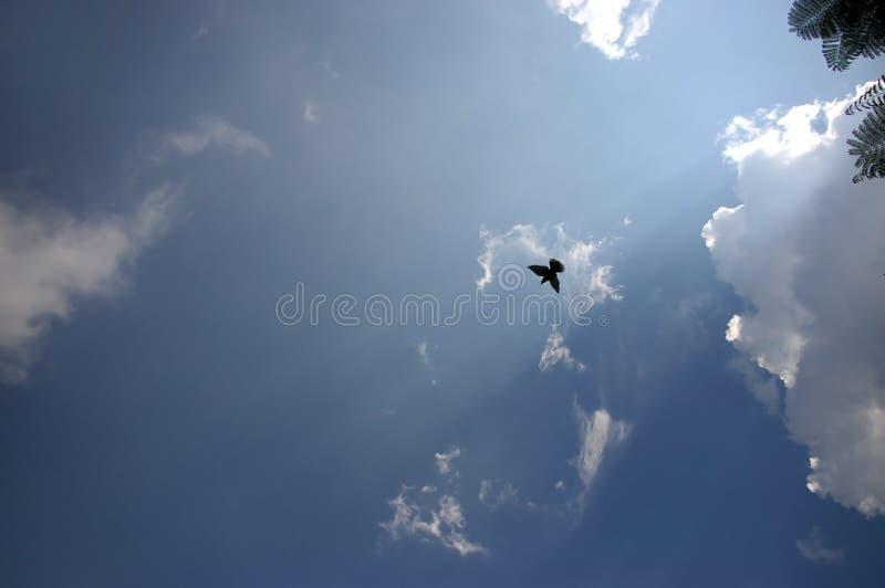 Vogel auf Himmel stockfotografie