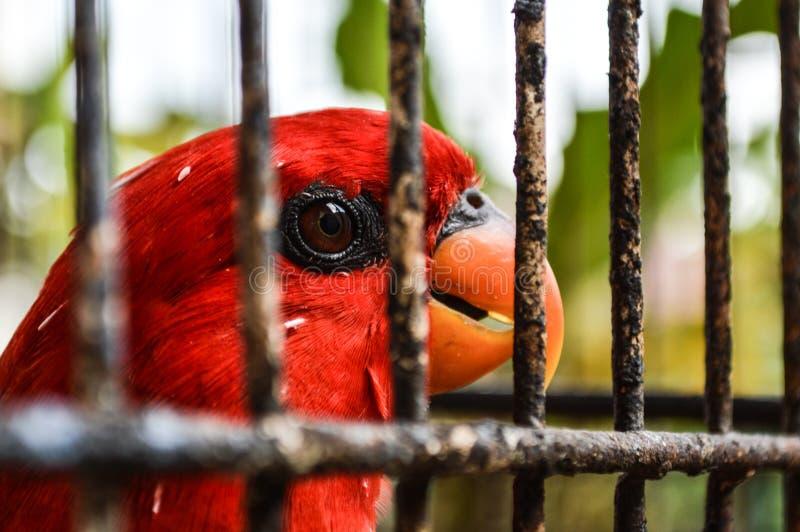 Vogel auf Käfig lizenzfreie stockfotos