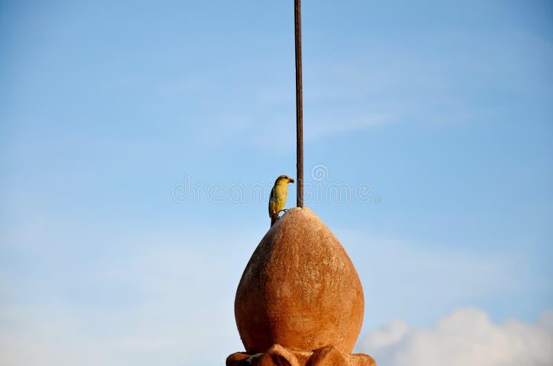 Vogel auf Pagode in Bagan lizenzfreie stockfotografie
