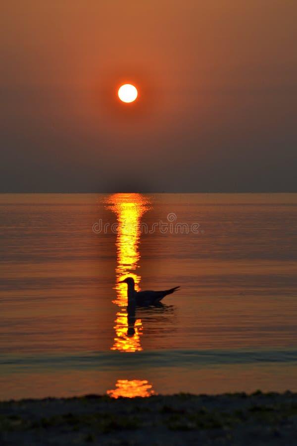 Vogel auf Sonnenaufgangmeer stockbilder