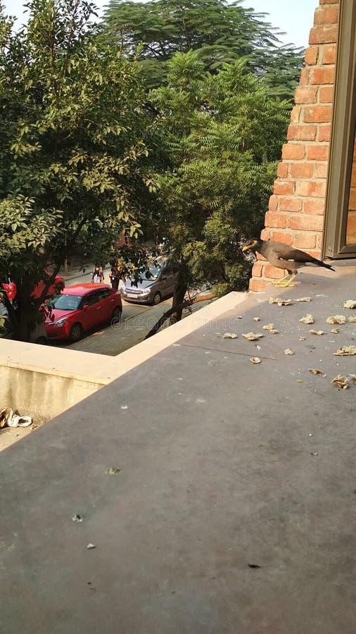 Vogel auf Terrasse stockbild