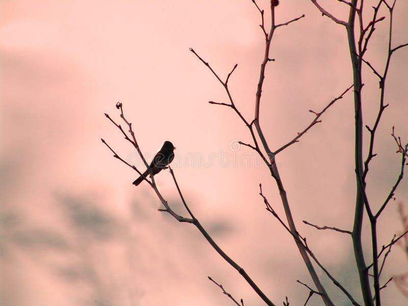 Vogel auf Zweig stockfotos