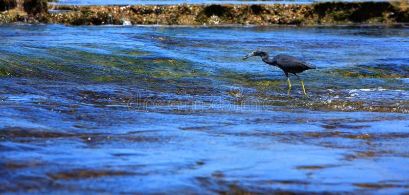 Vogel bij strand royalty-vrije stock afbeelding