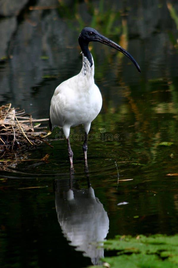 Vogel - Blende stockfoto