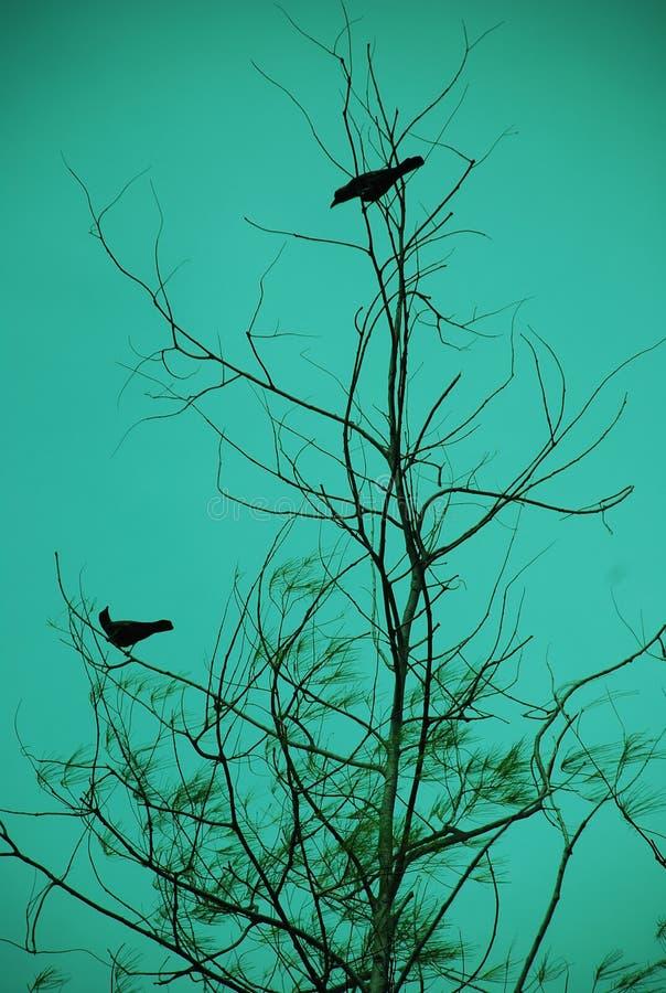 Vogel-Datierung lizenzfreie stockfotografie