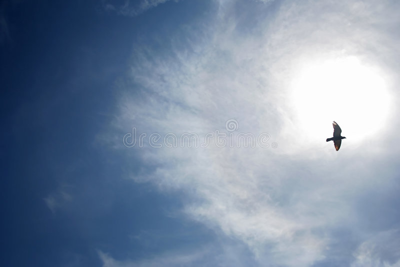 Vogel in de hemel royalty-vrije stock foto