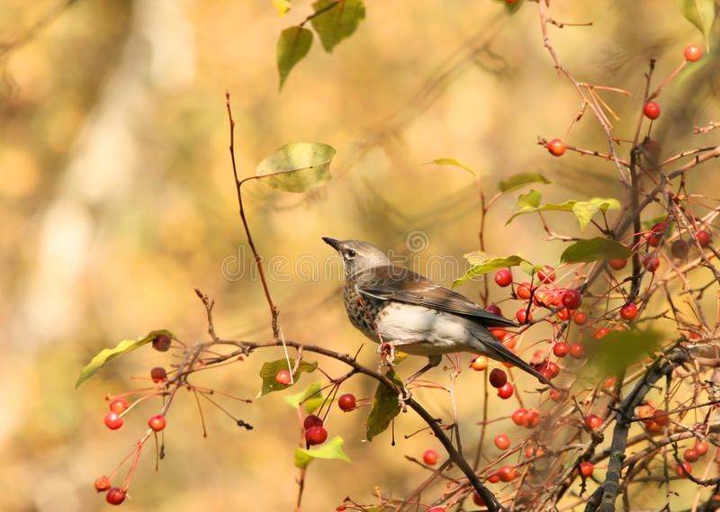 Vogel in de herfstpark royalty-vrije stock foto