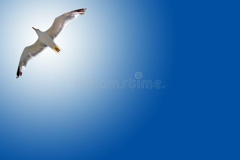 Vogel in de lucht met vleugels brede open royalty-vrije stock foto
