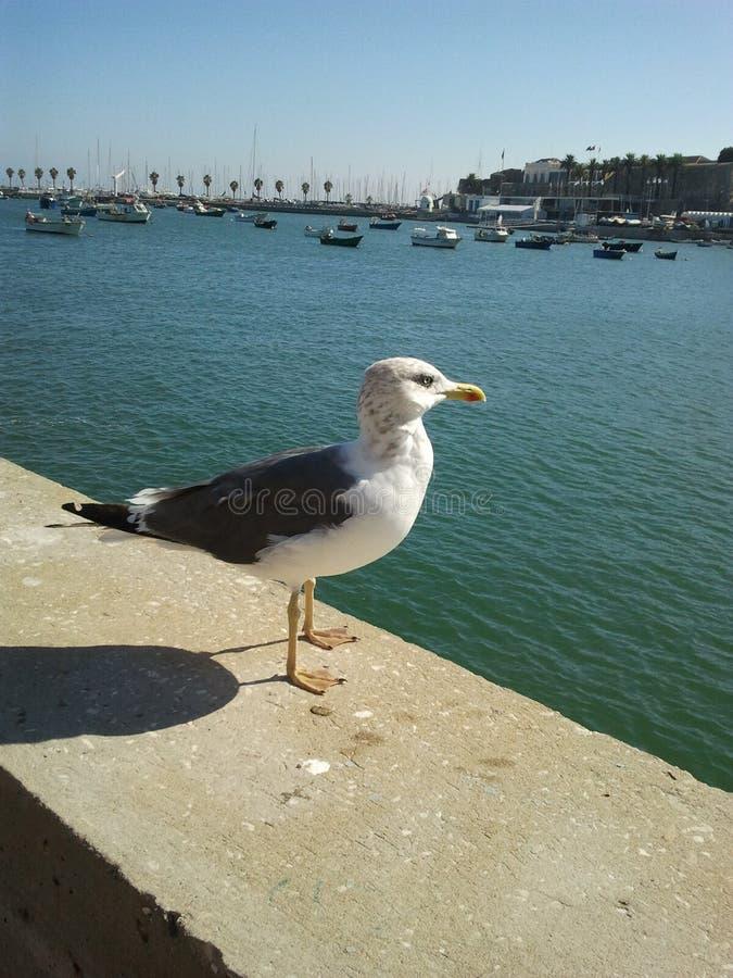 Vogel in de stad stock afbeelding