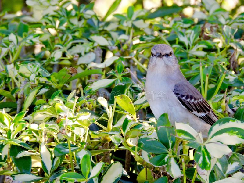 Vogel in de struik royalty-vrije stock foto