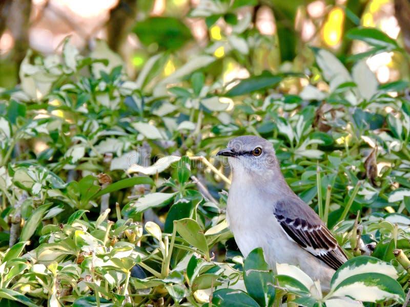 Vogel in de struik stock afbeeldingen