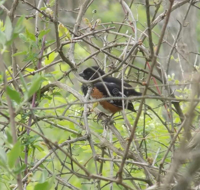 Vogel in de struik royalty-vrije stock afbeelding