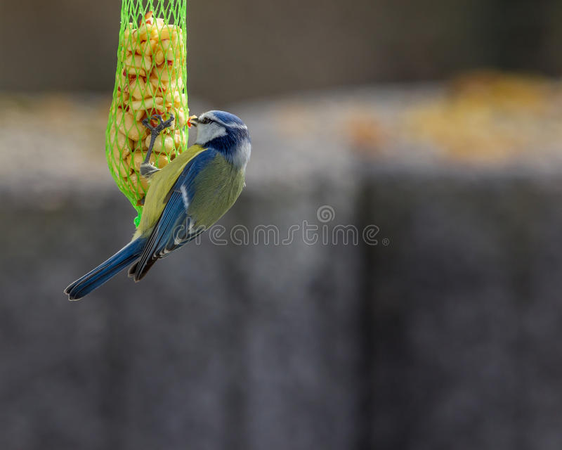 Vogel in de tuin royalty-vrije stock afbeelding