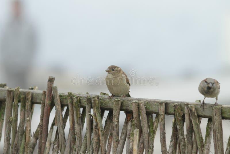 Vogel in de winter royalty-vrije stock afbeelding