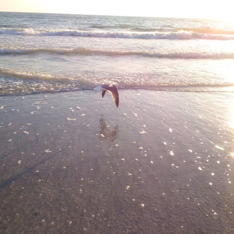 Vogel, der über Ozean fliegt, um Satz zu sonnen stockbild