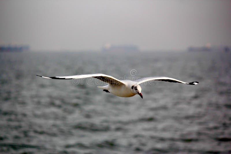Vogel, der über Wasser gleitet lizenzfreies stockfoto