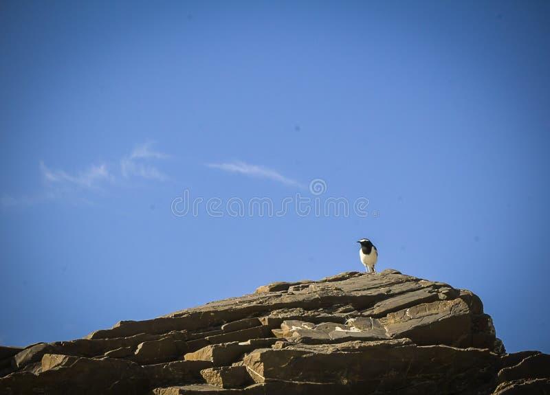 Vogel, der auf einem Felsen stillsteht stockfotografie