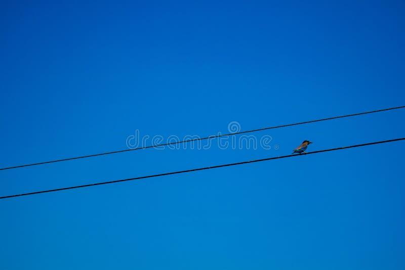 Vogel, der auf der Stromleitung Draht über blauem Himmel sitzt lizenzfreie stockfotografie