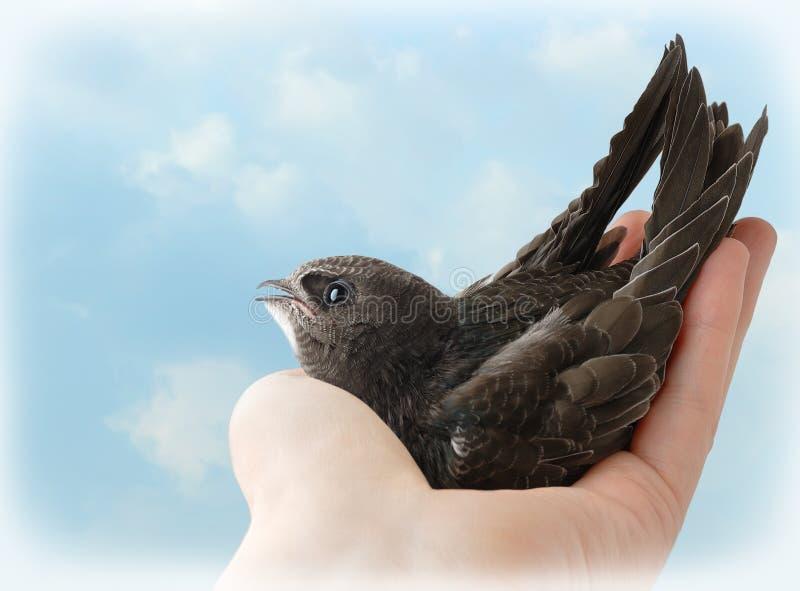 Vogel in der Hand stockfoto