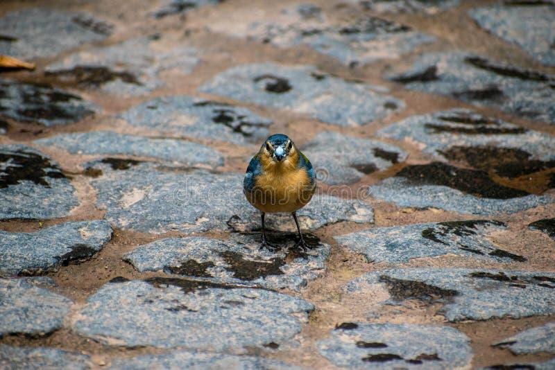 Vogel in der Mitte für Klimainterpretation von Caldeira Velha stockfoto