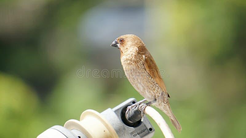 Vogel in der Stadt lizenzfreie stockfotografie