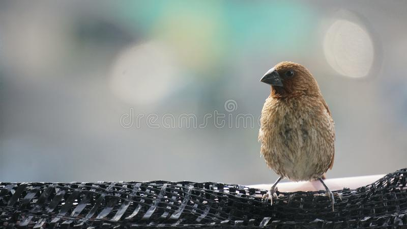 Vogel in der Stadt lizenzfreies stockbild