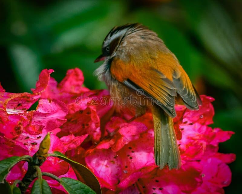Vogel, der von den Blumen einzieht stockfotos