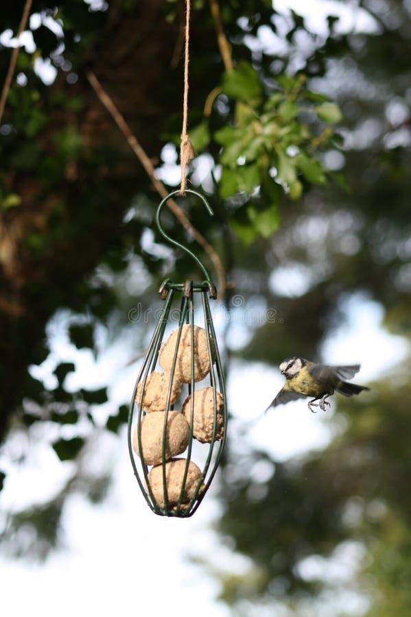 Vogel die aan Voeder vliegen stock foto's