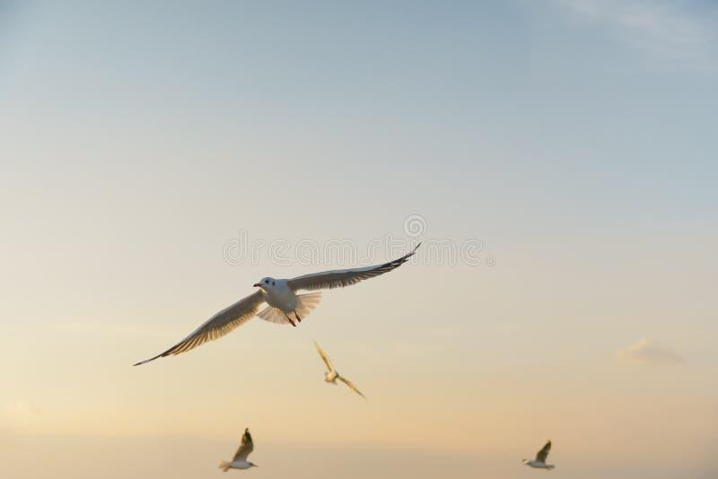 Vogel die bij zonsondergangruimte glijden voor tekst stock fotografie