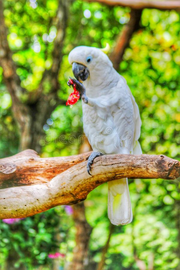 Vogel die druif eten royalty-vrije stock afbeeldingen