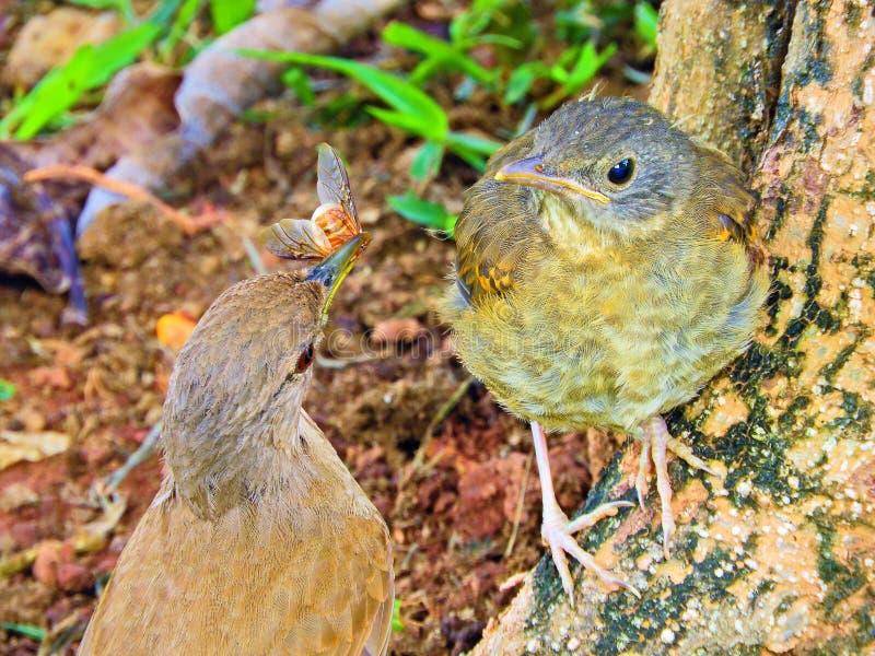 Vogel die hun welp in het nest voeden stock afbeelding