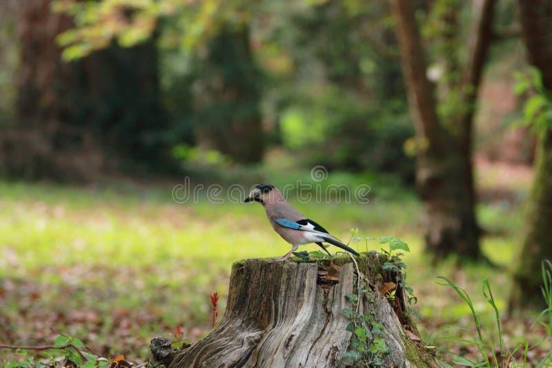 Vogel die op een stomp rusten royalty-vrije stock afbeeldingen
