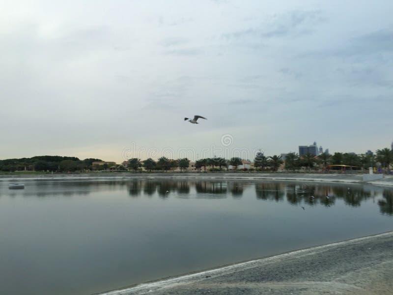 Vogel die over een vijver vliegen royalty-vrije stock foto's