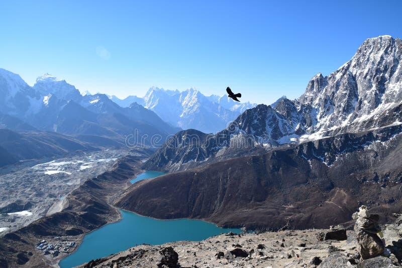 Vogel die over Gokyo-meren, Nepal vliegen stock afbeeldingen