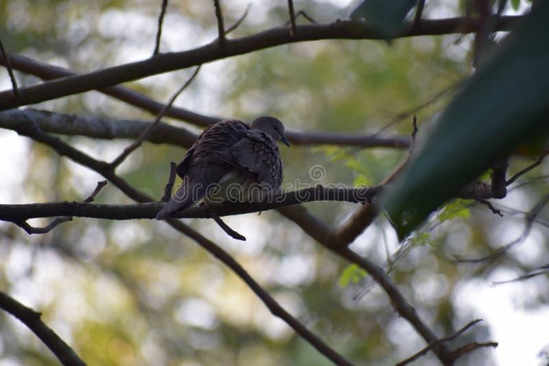 Vogel die rust in een tak van boom nemen royalty-vrije stock afbeelding