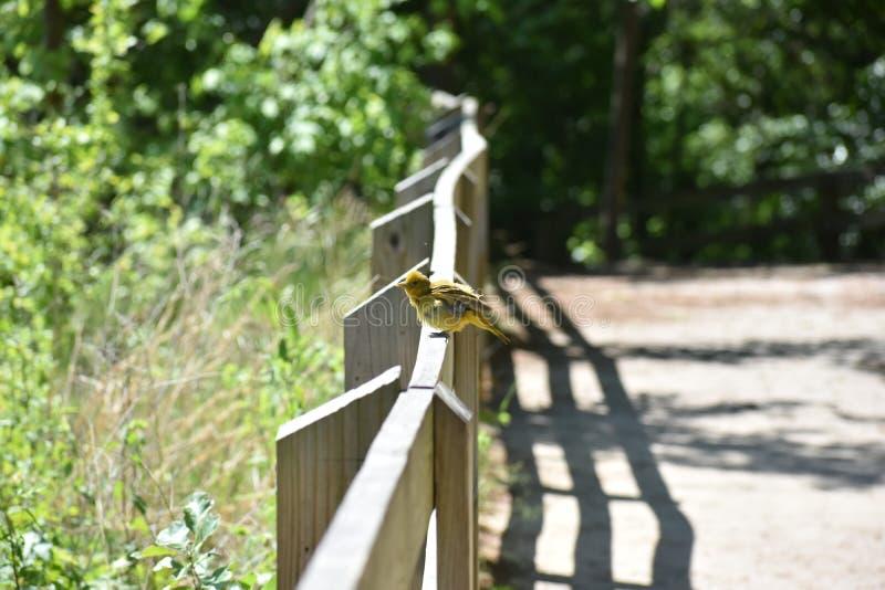 Vogel die Veren verstoort stock foto