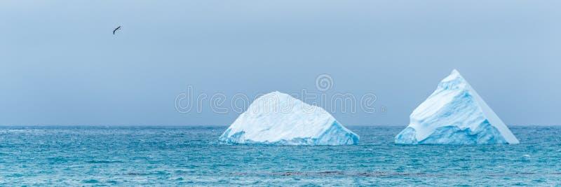 Vogel die voorbij twee ijsbergen op zee vliegen royalty-vrije stock afbeeldingen