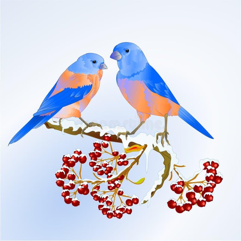 Vogel-Drosseldrossel kleines songbirdon an auf der schneebedeckten Baum- und Beerenwinterhintergrundweinlese-Vektorillustration e lizenzfreie abbildung
