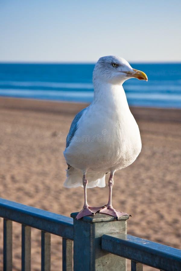 Vogel durch die Küste lizenzfreie stockbilder