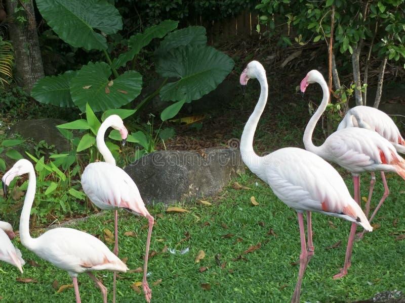 Vogel in een dierentuin royalty-vrije stock foto's