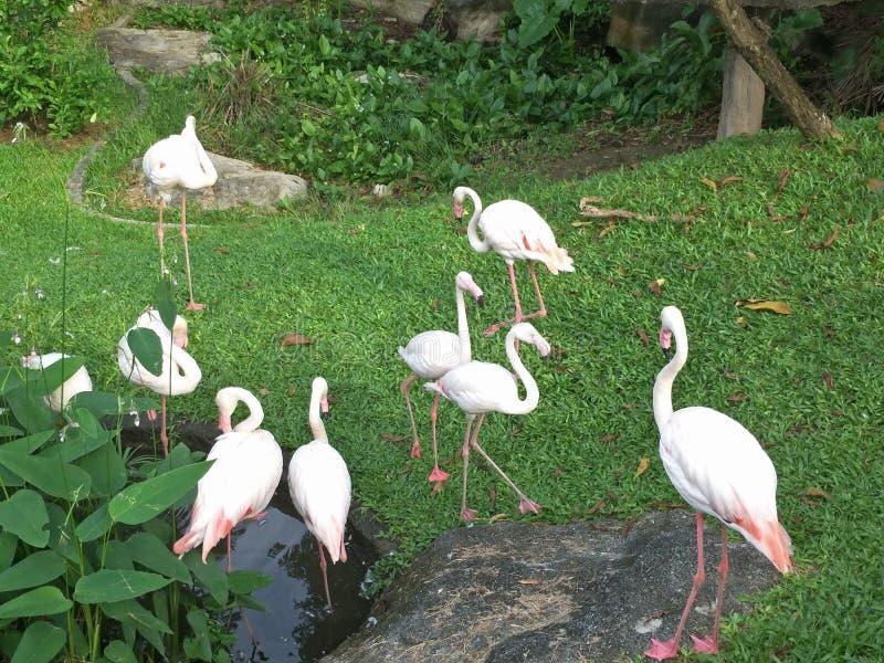 Vogel in een dierentuin royalty-vrije stock afbeeldingen