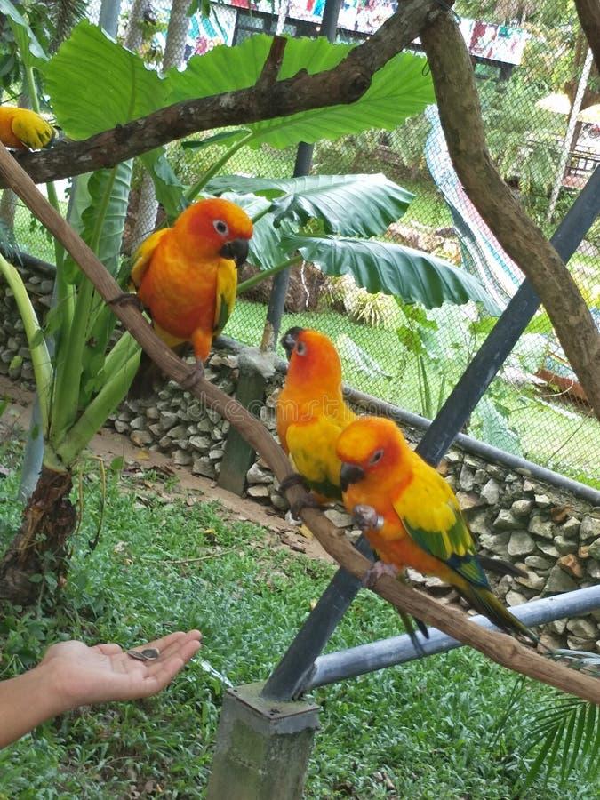 Vogel in een dierentuin stock foto's