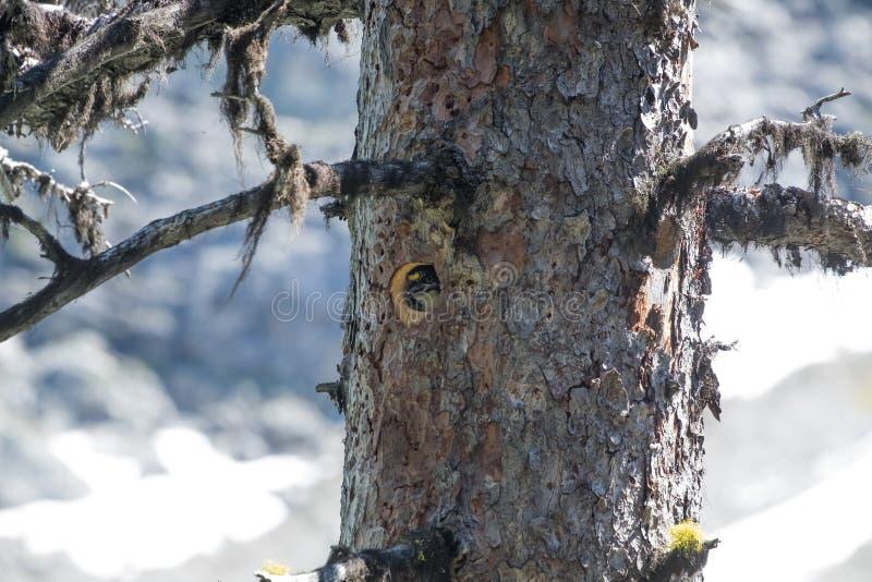 Vogel in een gat stock foto's