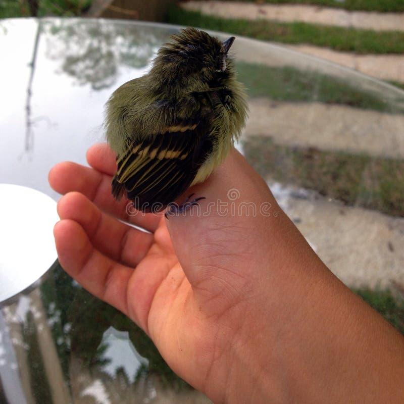 Vogel in een hand stock afbeelding