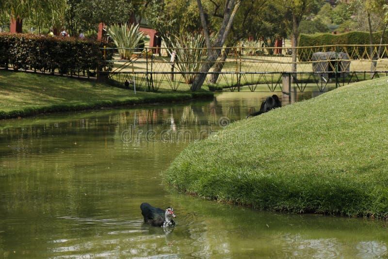 Vogel in einem Teich lizenzfreie stockfotografie