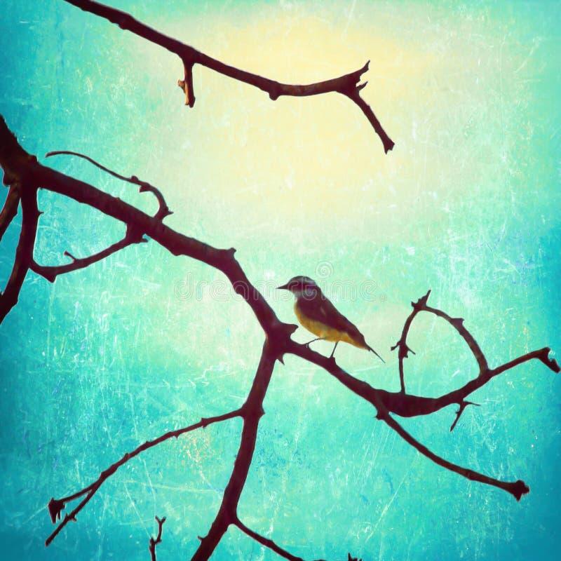 Vogel in einem Zweig lizenzfreies stockbild