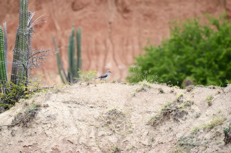 Vogel in einer Wüste lizenzfreies stockfoto